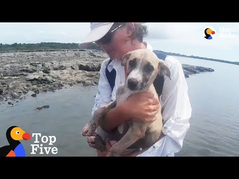Puppy Rescued On Deserted Island + Other Highly Unusual Animal Rescues | The Dodo Top 5