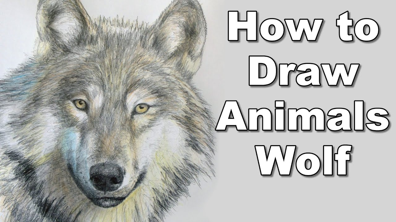 How to draw a wolf realistc animals drawing lesson step by step time lapse tutorial
