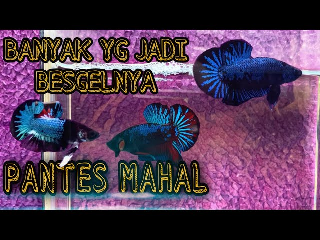 10 Top Grade Avatar Gordon Youtube