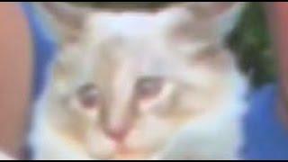 ШОК Госдеп США тайно посылает котов в космос