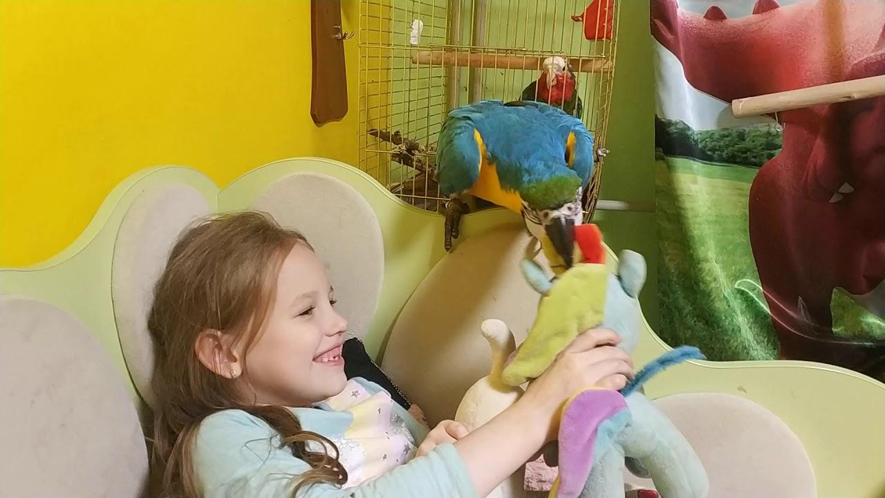 Попугай ара не даёт ребенку играть с игрушками