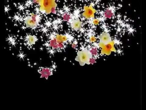 Видео с цветами скачать бесплатно