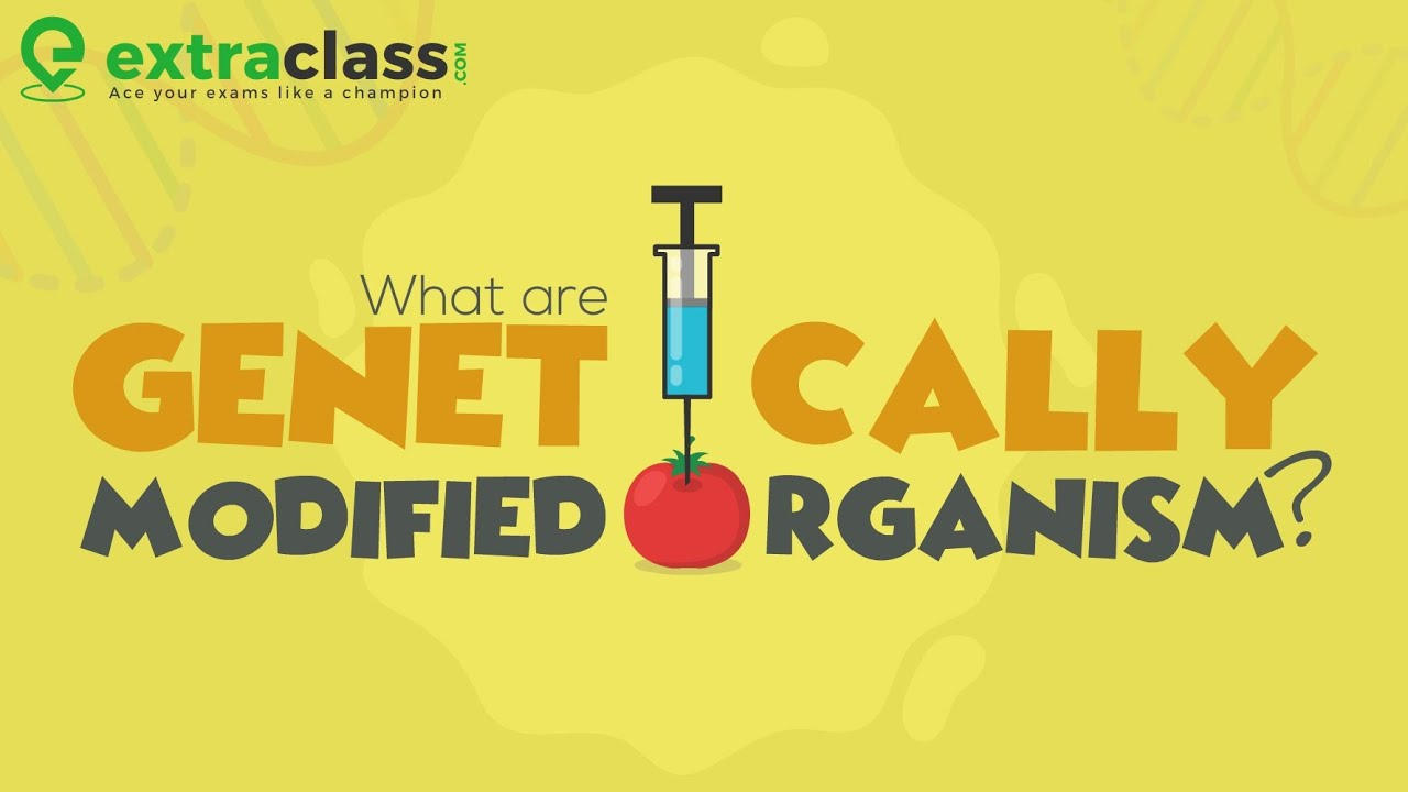 What are Genetically Modified Organism? | Biology | Extraclass.com