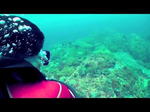 Donsol Ecotours Promo video.m4v