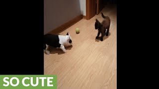 Super cute puppy and kitten playtime fun