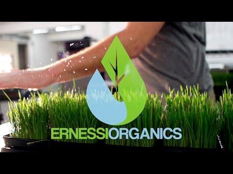Ernessi Organics - Indoor Vertical Farm in Ripon, WI