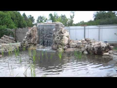 Жизнь пресного водоема