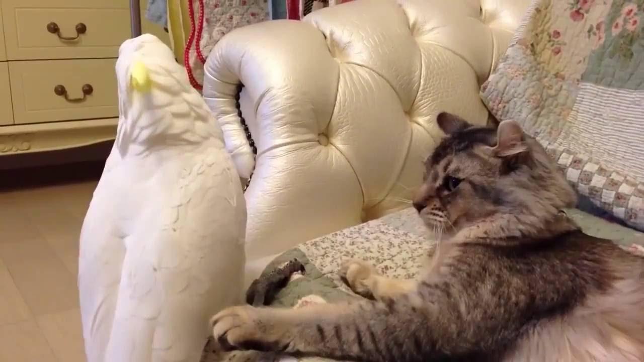Картинки смешные кошки до слез видео
