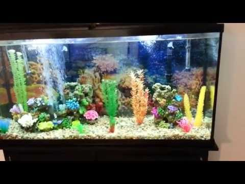 60 gallon fresh water aquarium fishless cycle day 1 youtube. Black Bedroom Furniture Sets. Home Design Ideas