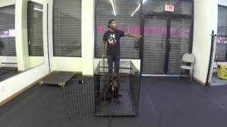 Multiple Pressure Association Tips- Nyc Dog Training - Dctk9