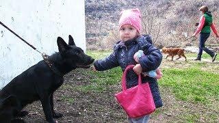 Какую собаку завести ребенку? Советы настоящего инструктора по дрессировке