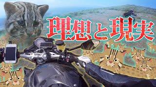 遂に探し求めた伝説のツシマヤマネコと遭遇なるか・・!? #猫#ヲカライダー#ツシマヤマネコ.