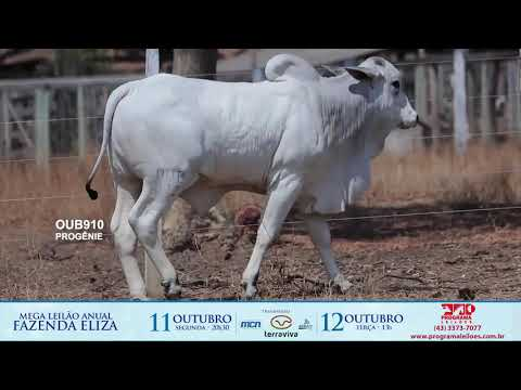 LOTE 198