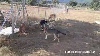 DOG HOTEL - Ώρα για παιχνίδι (Play time) 1 - ΜΙΛΑ ΣΤΟ ΣΚΥΛΟ ΣΟΥ