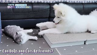 Can Dogs and Cats Be Friends? (Milky & GB)