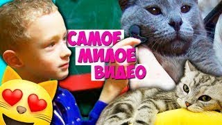 Приехали в Котокафе в Москве // ОЧЕНЬ МНОГО КОШЕК / Котята играют с детками