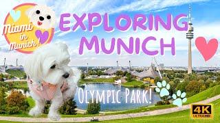 ⚽ Exploring Olympic Park!  MIAMI IN MUNICH  OLYMPIAPARK MÜNCHEN IN 4K CUTE MALTESE DOG VIDEO