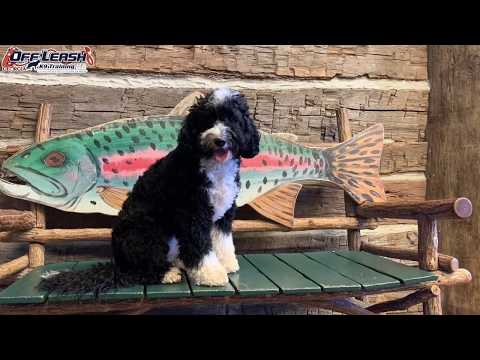 """Atlanta Airport Distractions! 