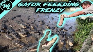 FEEDING HUNDREDS OF ALLIGATORS!