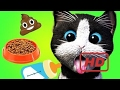 🎮 Little Kitten Playful Animation Kids Games - Cat Play Learn Bath Feed | Fun Care Games For Kids