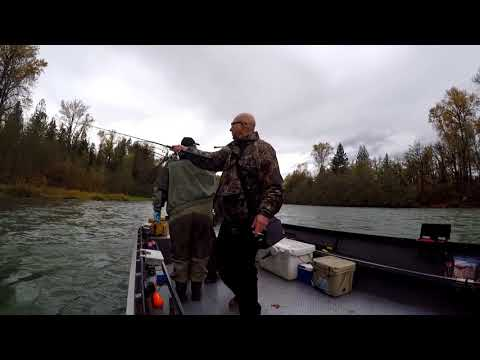 Chasing Salmon On The Cowlitz River