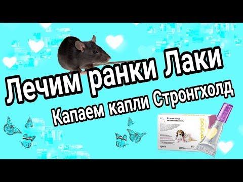 Лечим ранки Лаки // Капаем капли Стронгхолд