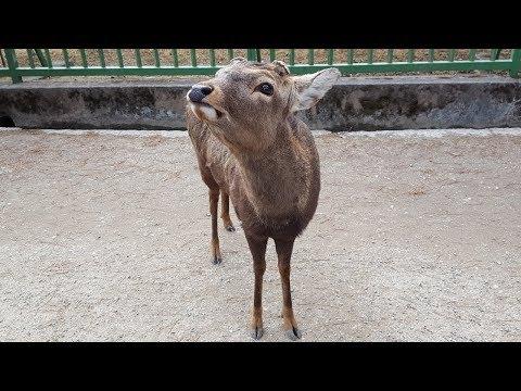 Kansai Region of Japan - Feeding the Deer at Nara, Osaka Aquarium, and More!