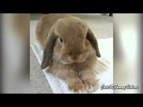 Cute and Funny Bunny Rabbit Videos Compilation 2015  Part 5