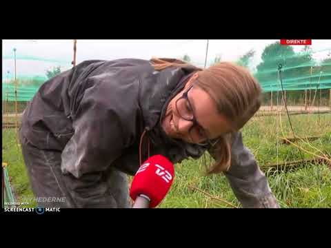 Ditte og Carsten snegle - live på tv 2 news aften nyhederne