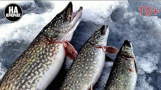 Жерлицы. Зимняя рыбалка на щуку. По щучьим местам.