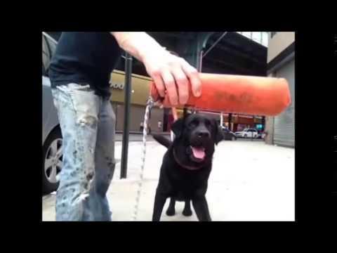 How to teach dog fetch.................Peter Caine Brooklyn dog training