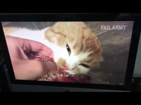 Cat fails of awesomeness - Georgie's first video!!!