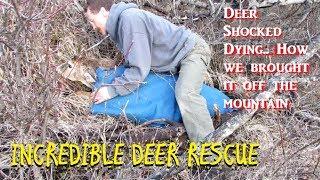 DEER RESCUE!! UNBELIEVABLE FOOTAGE SAVING A DEER!