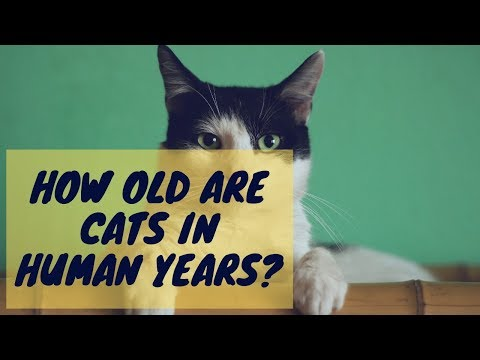 How Old Are Cats in Human Years?