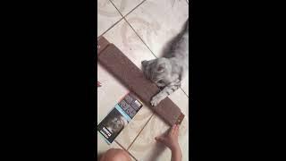 Кошка и #когтеточка#
