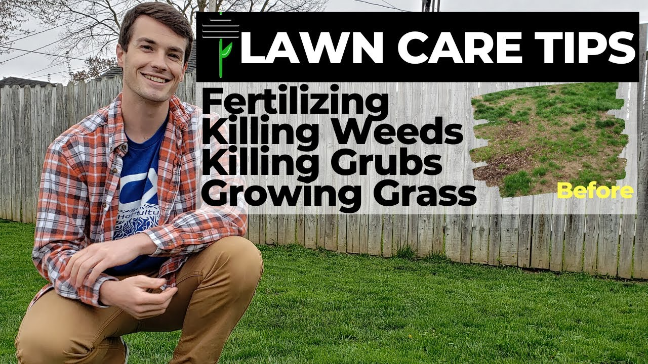Lawn Care Tips Killing Weeds Organic Grub Control Grass Seed