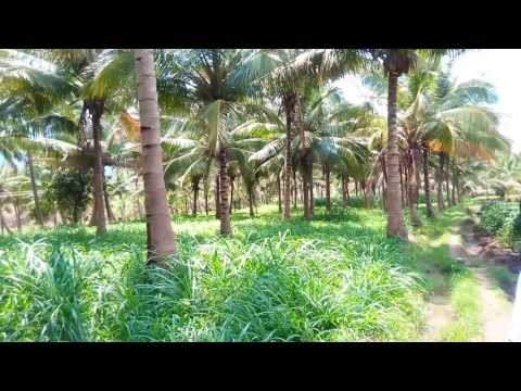 Coimbatore Sriuvani Road Karunya Near Farm Land & House For Sale