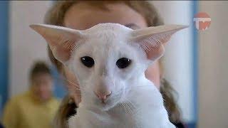 Выставка кошек прошла в Доме Офицеров Уссурийска