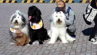 静岡県清水区で開催されたドッグフェスタに行ってきました。オールドイ...