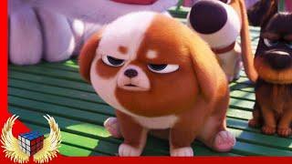 Ну все, Пирожок в гневе! (Тайная жизнь домашних животных 2)