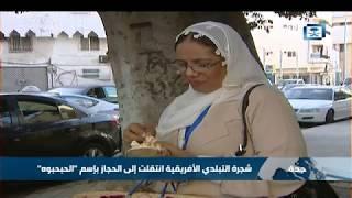 Sudanes Gongolis Benefits 2009 Youtube