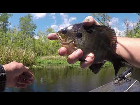 My Saturday Fishing Black River South Carolina.