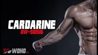 A Beginner's Guide To Cardarine (GW501516)