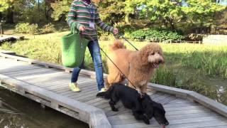 昭和記念公園は、東京デズニーランドの3倍の広さが有ります。 ドッグラ...