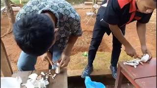 Video PART 1. Teknologi Kultur Jaringan Tanaman download MP3, 3GP, MP4, WEBM, AVI, FLV September 2018