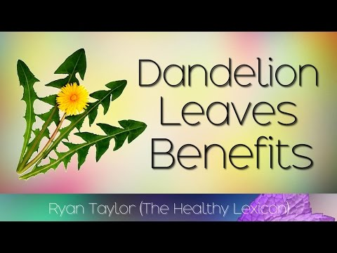 Dandelion Leaves: Benefits and Uses