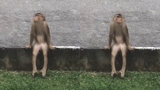 A Monkey That Sits Like This