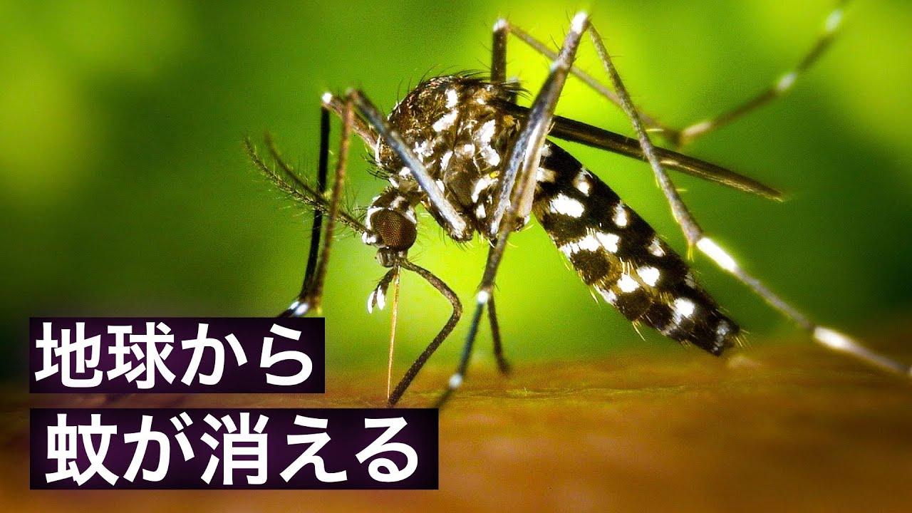 【抹殺】地球上の蚊を全て絶滅させると何が起こるのか?