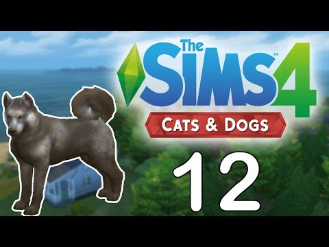 Wedding Fail?! // The Sims 4 Cats and Dogs // Part 12
