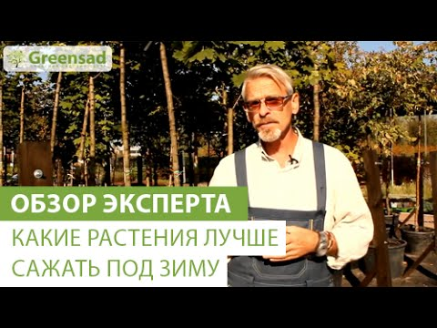 Ольха. Рассказы о деревьях